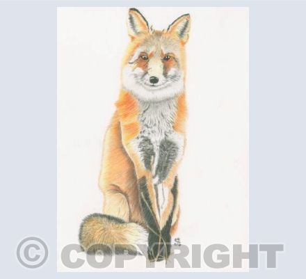 The Kenning Fox