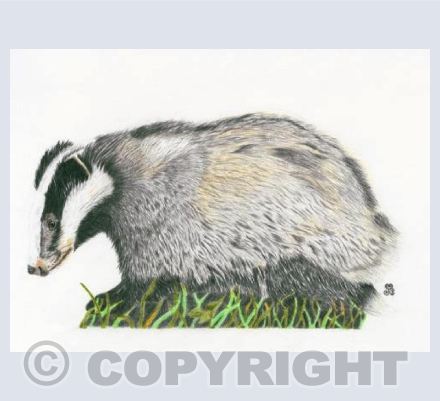 The Indomitable Badger