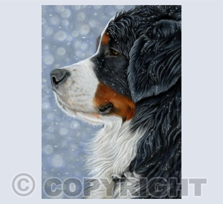 Let It Snow - Bernese
