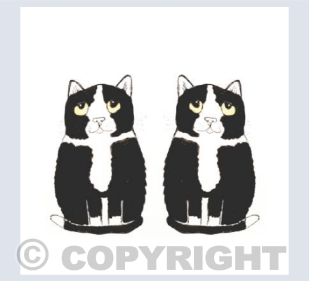 Black and white mirror cats