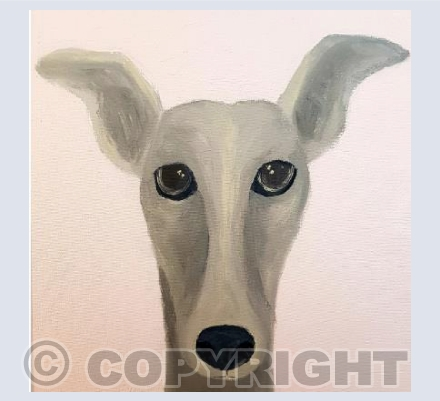 Grey Whippet