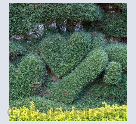 Hearts in Nature 3