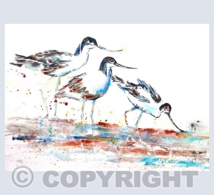 Avocets about