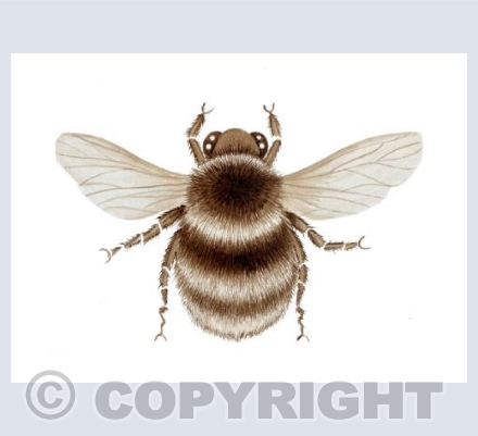 The Sepia Bee