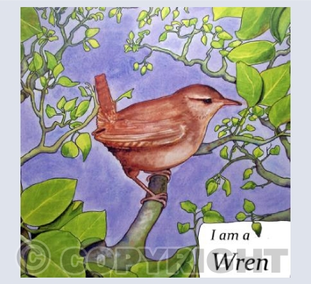 I am a Wren 1 of 6