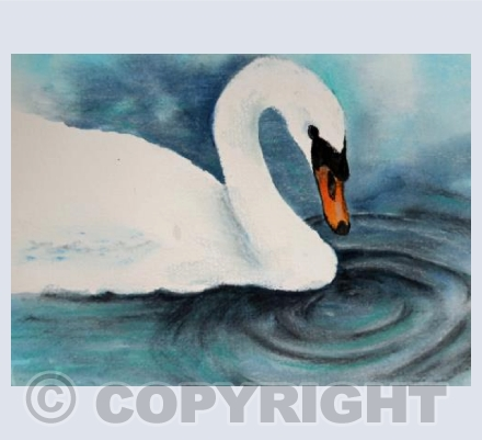 Swan and ripple