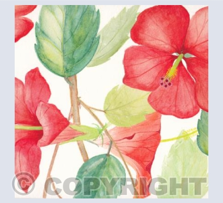 Square Card Hibiscus