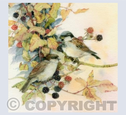 Sparrows on Brambles