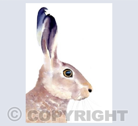 Whimsical hare