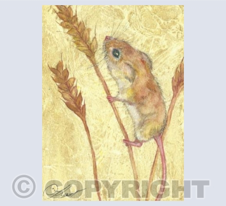field mouse in corn