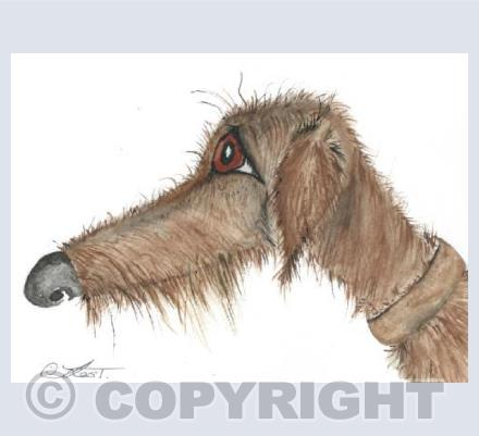 Long haired Lurcher