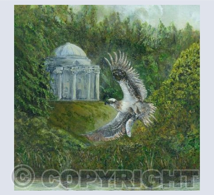Osprey at Stourhead