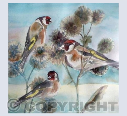 Goldfinches and Teasels