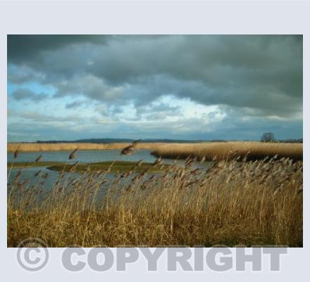 Storm above the Reeds