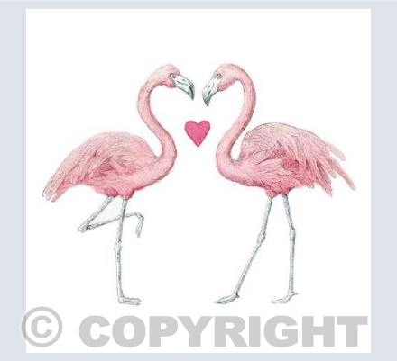 Love flamingoes