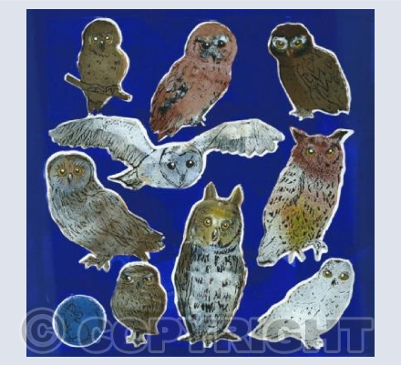 Owls (on blue)