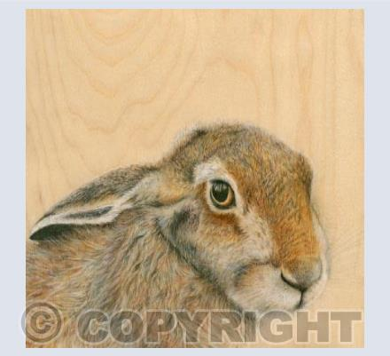 Hare With Reflection