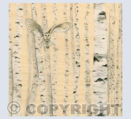 Owl In Birch