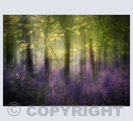 Sunlight in the Bluebell wood
