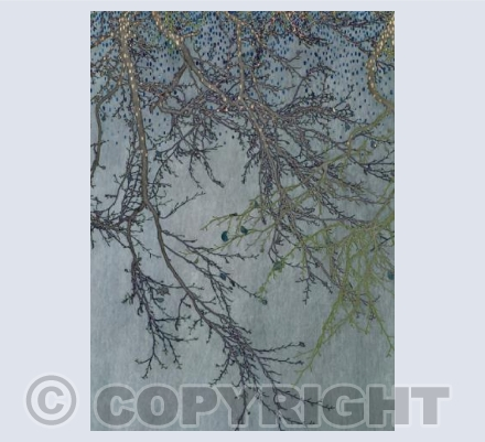 Winter Branches with Gold