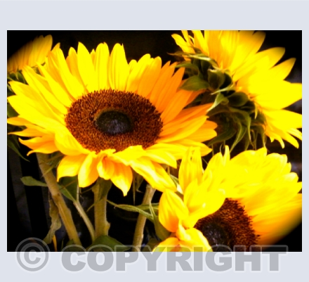 Photography Florals