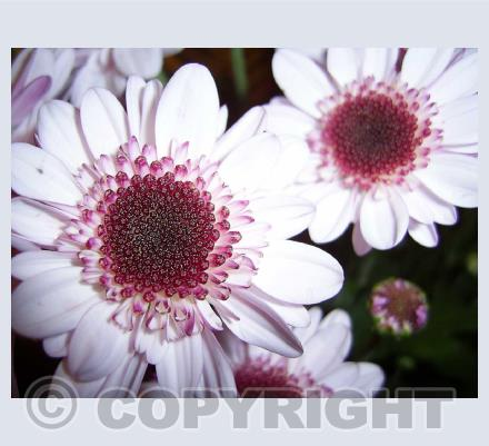Photographic Cards - Flowers/Plants